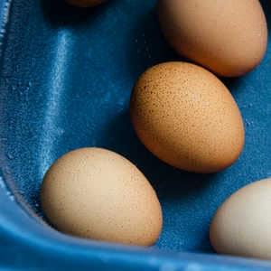 Eier pasteurisieren mit Sous-Vide