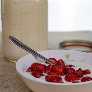 Milchsäurebakterien, Probiotika selber kultivieren und Joghurt machen