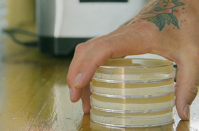 Nährboden für Petrischalen aus Agar und Brühe - Bakterienzüchtung